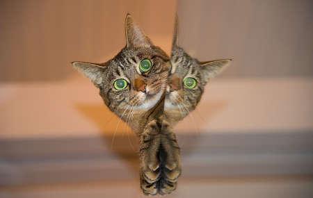 Neugierige Katze möchte spielen