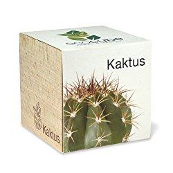 Holzwürfel mit Kaktus als stachelige Geschenkidee
