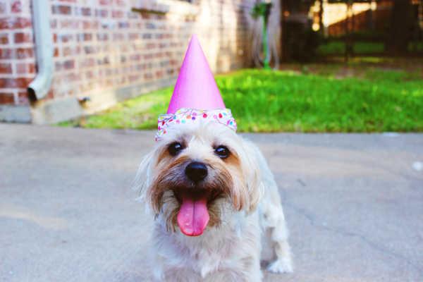 Hund hat Geburtstag und ist fröhlich