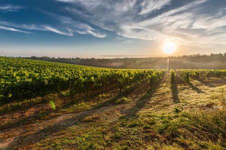 Weinanbau für Weinliebhaber