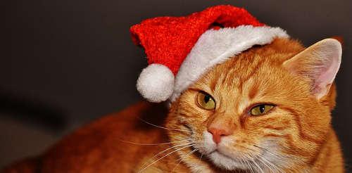 Weihnachtsgeschenk für Katzen und Katzenliebhaber