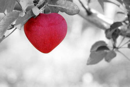 Last-Minute Geschenke und Ideen zum Valentinstag