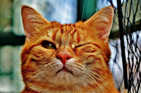 Lustiges Motiv für ein T-Shirt, Katze zwinkert