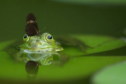 Miniteich Gestaltung mit Frosch