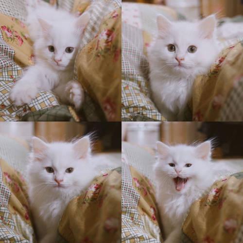 Meine süße Katze Momo